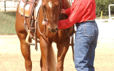 Reining Essential 4 – Backing (green horse)