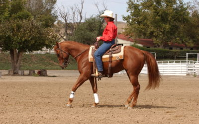 Reining Essential 4 – More Advanced Backing