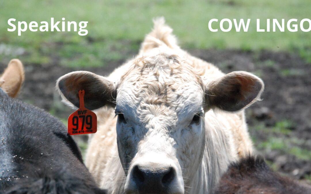 Speaking Cow Lingo
